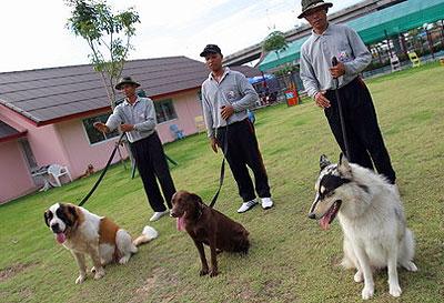 ศูนย์การสุนัขทหาร