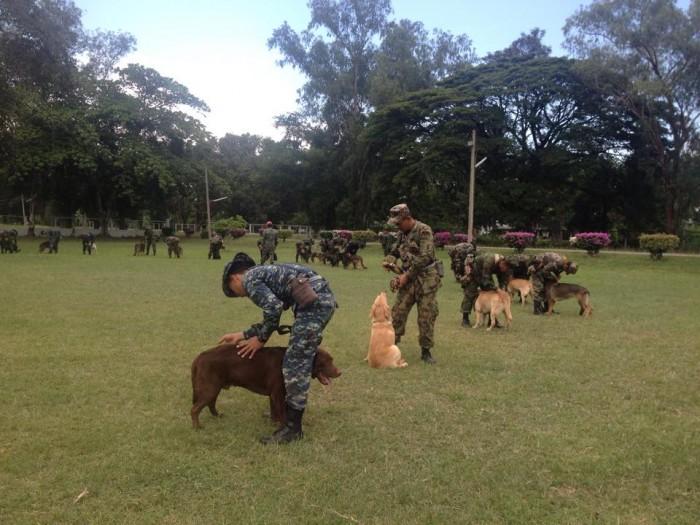 โรงเรียนสุนัขทหาร